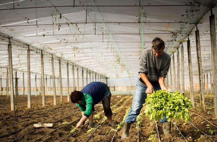 Почему инвестирование в сельское хозяйство Албании стало еще привлекательнее