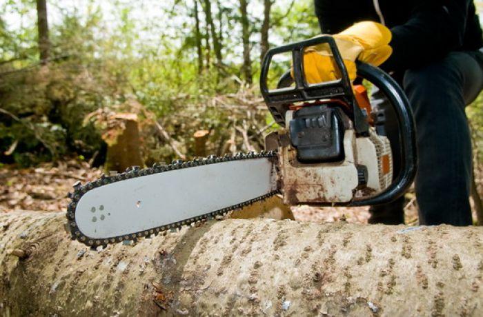 Как Албания борется с незаконной вырубкой лесов?