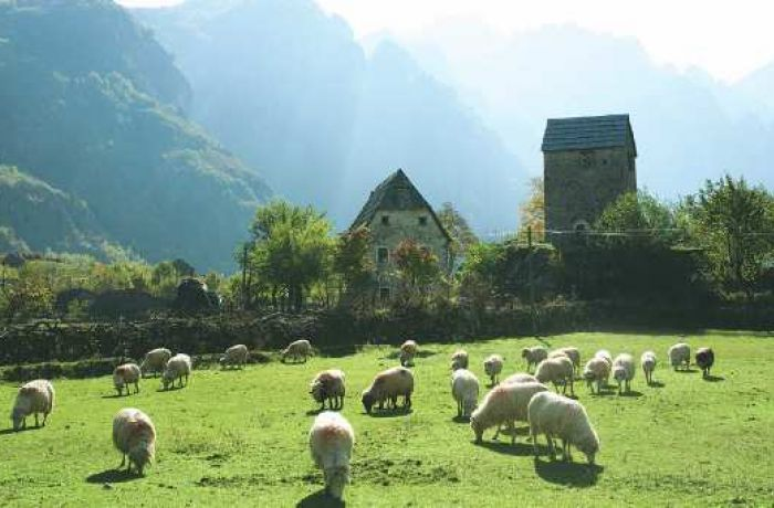 ФАО: на фермах Албании не хватает женщин-управленцев