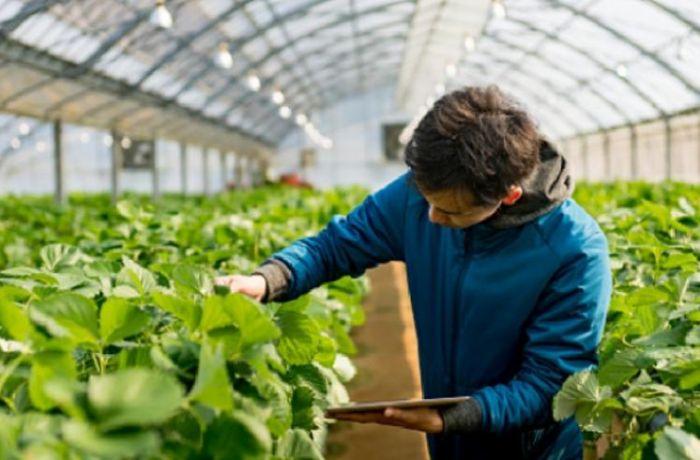 Албания собирается получить 71 млн. евро у ЕС для финансирования сельского хозяйства