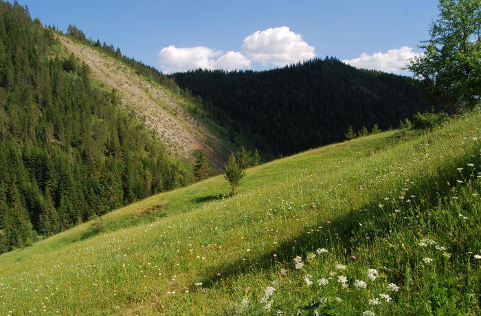 Всемирный банк поможет Албании увеличить поток инвестиций в лесное хозяйство