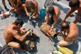 Где можно изучить археологическое наследие Албании?